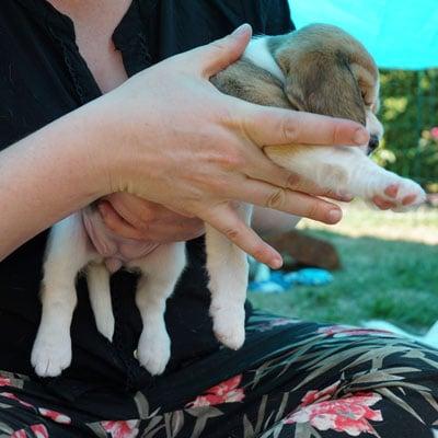 giv din hvalp en god start med et hvalpetjek der løsner skævheder fra fødslen hos dogsrus hundecenter