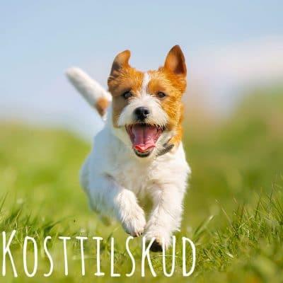 kosttilskud hos dogsrus.dk