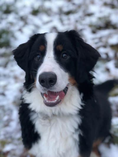 dogsrus.dk hundehotel hundepension
