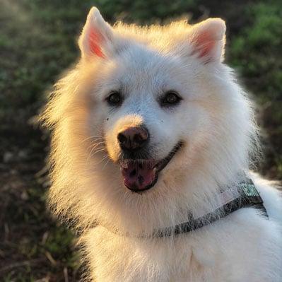 dogsrus.dk hundepasning på din hunds præmisser